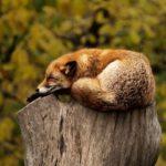 how serious is sleep apnea